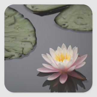 Soft Pink Waterlily Flower Square Stickers