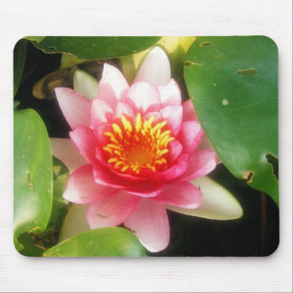 Soft Pink Waterlily Mouse Pad