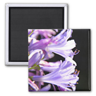 Soft Purple Agapanthus Flowers - Lily of the Nile 2 Inch Square Magnet