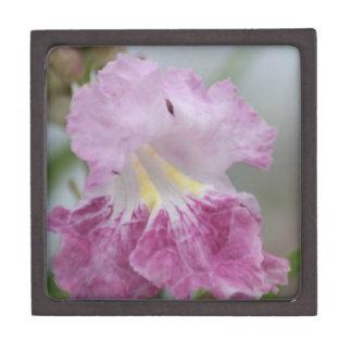 Soft purple and yellow Jacaranda flowers of spring Gift Box