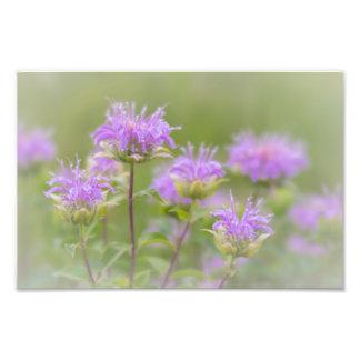 SOFT PURPLE FLOWERS | GOOD EARTH STATE PARK PHOTO PRINT