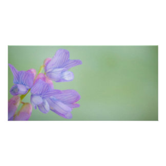 Soft Purple Wild Flowers with a Green Background Custom Photo Card