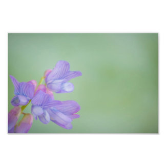 Soft Purple Wild Flowers with a Green Background Photo Print