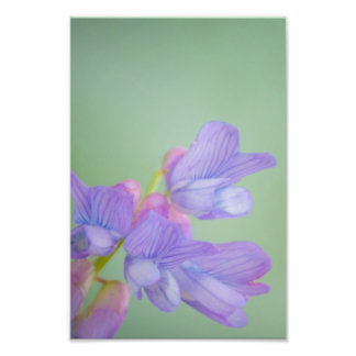 Soft Purple Wild Flowers with a Green Background Photo