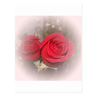 Soft Red Rose Pair Postcard