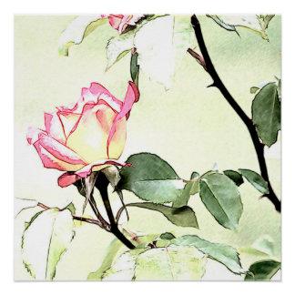 Soft rose poster