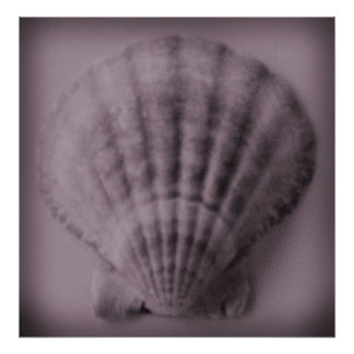 Soft Shell Print