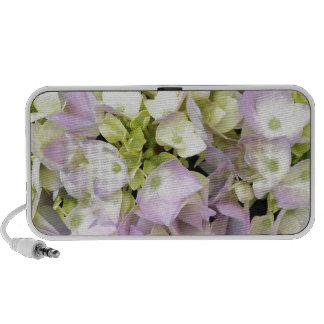 Soft Spring Hydrangea Blossoms Pink Lavender Green Laptop Speaker