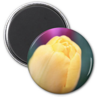 Soft tulips close up 2 inch round magnet