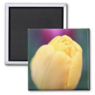Soft tulips close up 2 inch square magnet