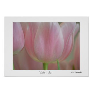 Soft Tulips Posters