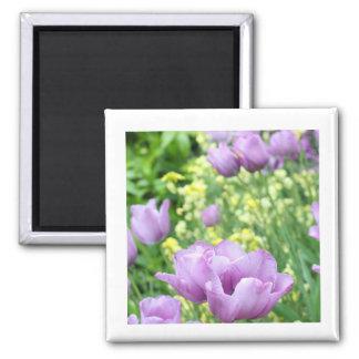 Soft, violet tulips 2 inch square magnet