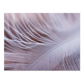 Soft white feather macro photography postcard