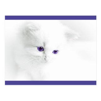 Soft White Kitten with Purple Eyes Postcard