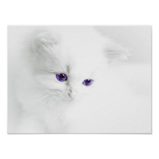 Soft White Kitten with Purple Eyes Poster
