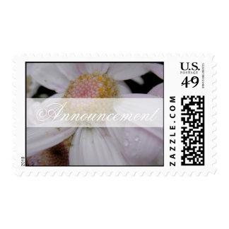Soft White Stamp