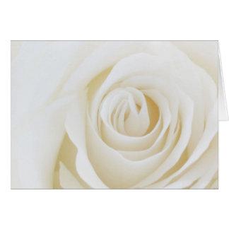Soft White Rose Greeting Card