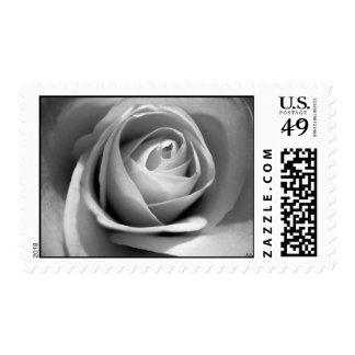 Soft White, S Cyr Postage