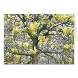 """""""SOFT YELLOW BLOSSOMS OF MAGNOLIA TREE"""" (PHOTOG) STATIONERY NOTE CARD"""