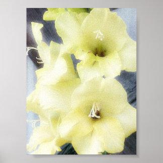 Soft Yellow Gladiolas Poster