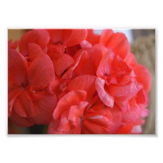 Soften Petals 7x5 Photographic Print