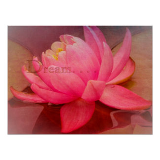 Softly Dreaming Water Lily Print