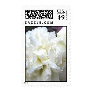 Softness (1) Postage Stamps