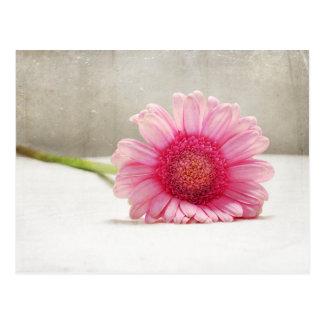 Softness in Pink Postcard