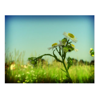 Softness Postcard