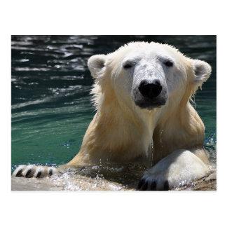 Soggy Polar Bear Postcard
