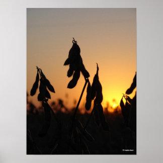 Sojas en la puesta del sol poster