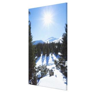 Sol 5 del invierno lona estirada galerías
