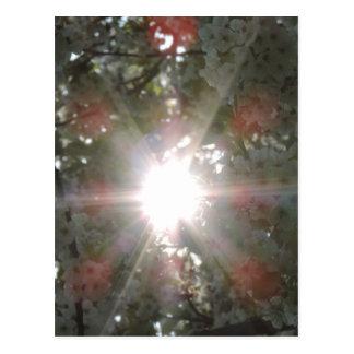 Sol a través de los flores blancos postal