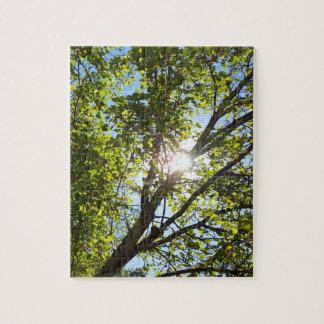 Sol a través del árbol verde de la hoja puzzle