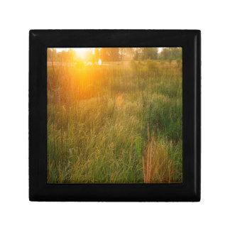 Sol de la reserva de naturaleza cajas de recuerdo