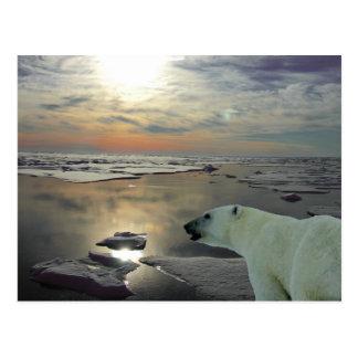 Sol de medianoche y oso polar, Océano ártico Postal