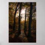 Sol del bosque impresiones