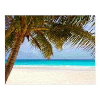 Sol del cielo azul del paraíso de la palma tarjetas postales