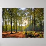 Sol del otoño en el bosque posters