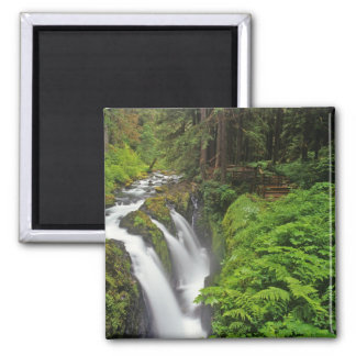 Sol Duc Falls in Olympic National Park in 2 Magnet