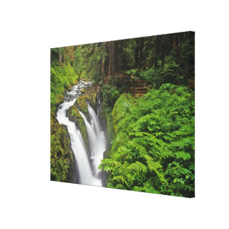 Sol Duc Falls in Olympic National Park in Canvas Print