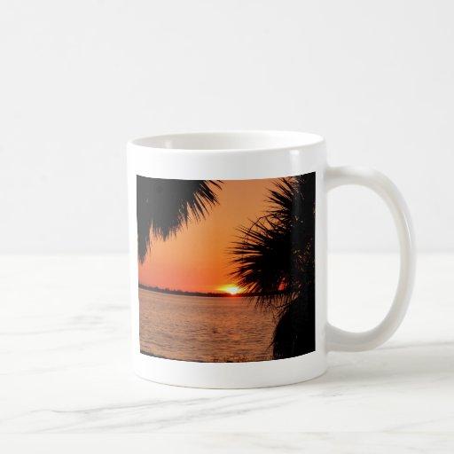 Sol el dormir de Sanibels Tazas De Café