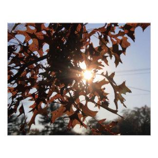 Sol y hojas