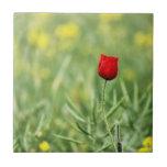 Sola amapola roja azulejo