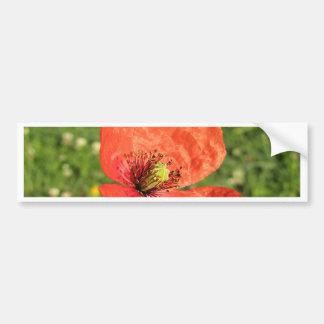 Sola amapola roja en jardín pegatina para auto