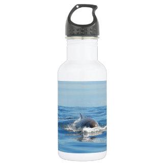 Sola ballena de Bottlenose