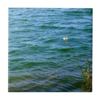 Sola charca de la caña del agua de la flor blanca tejas