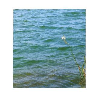 Sola charca de la caña del agua de la flor blanca blocs