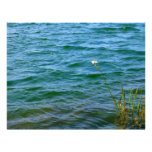 Sola charca de la caña del agua de la flor blanca plantilla de membrete