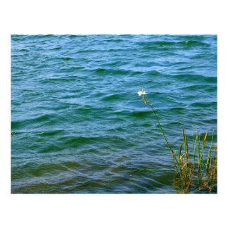 Sola charca de la caña del agua de la flor blanca plantillas de membrete